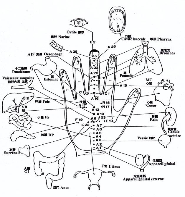 organes-main2